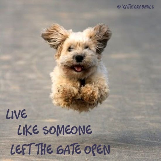live like someone left the gate open timeless fitness with susana